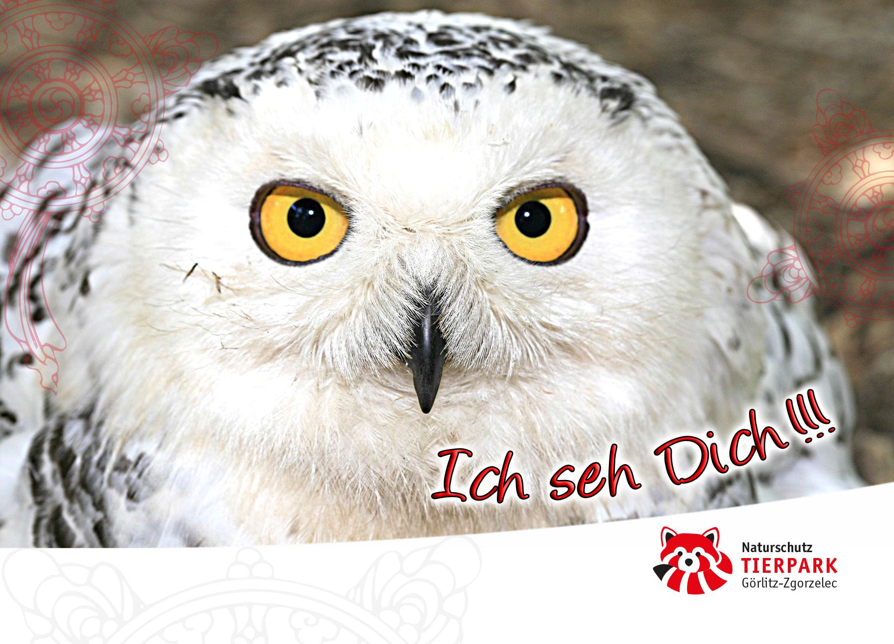 Postkarte Schnee-Eule : Ich seh Dich!!!