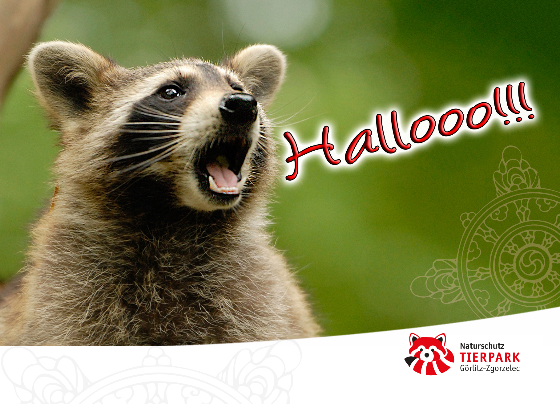 Postkarte Waschbär: Hallooo!!!