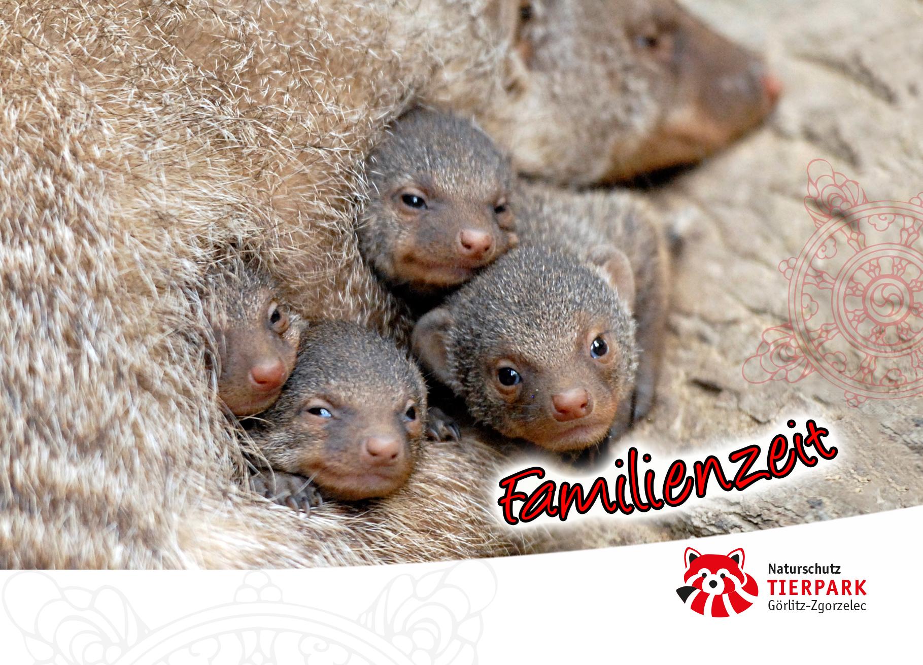Postkarte Mangusten: Familienzeit