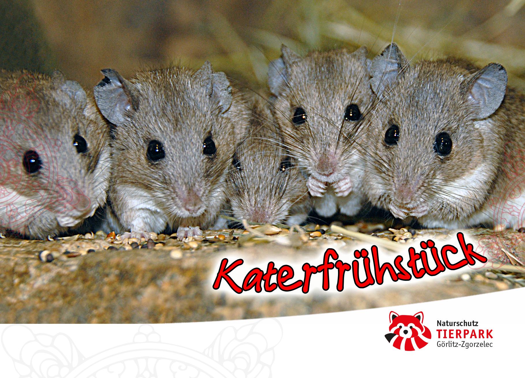 Postkarte Mäuse: Katerfrühstück