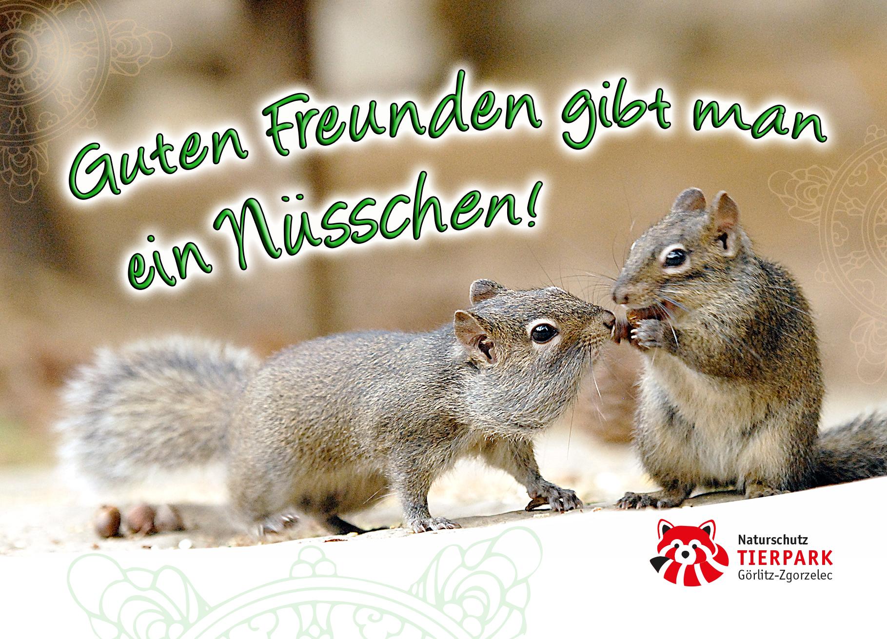 Postkarte Hörnchen: Guten Freunden