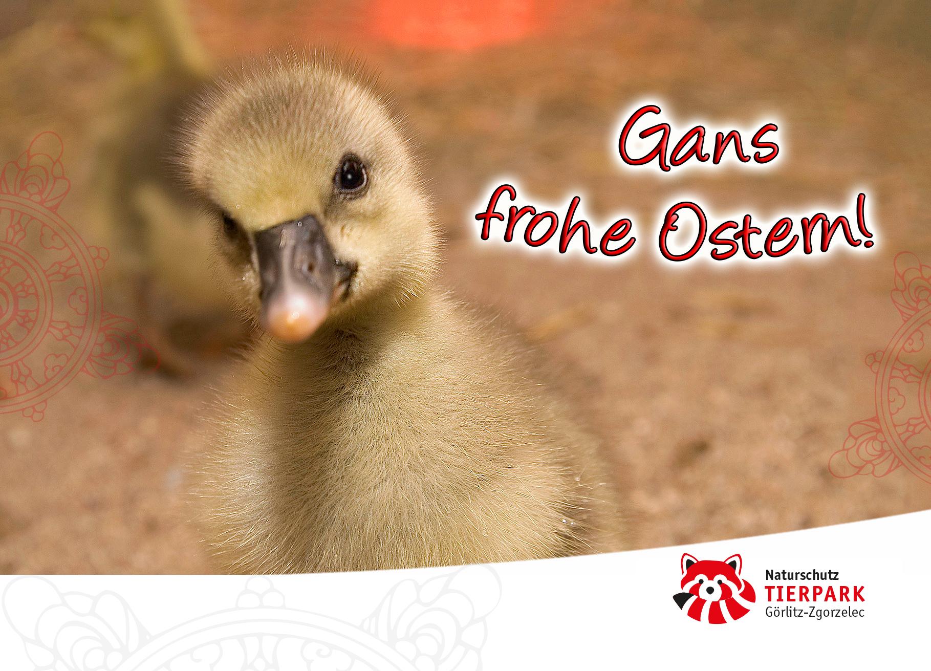Postkarte Küken : Gans frohe Ostern