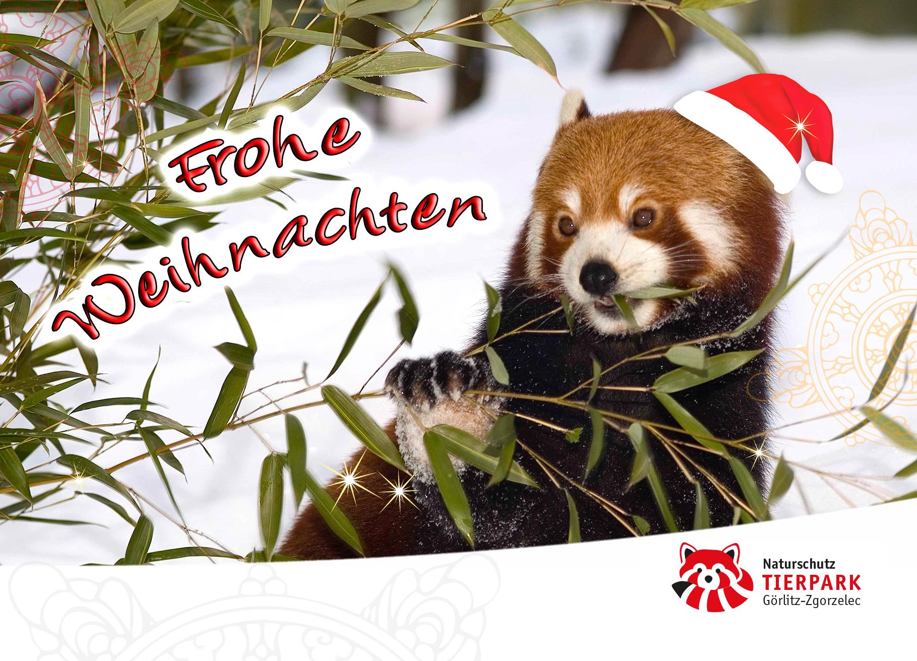 Postkarte Roter Panda: Frohe Weihnachten