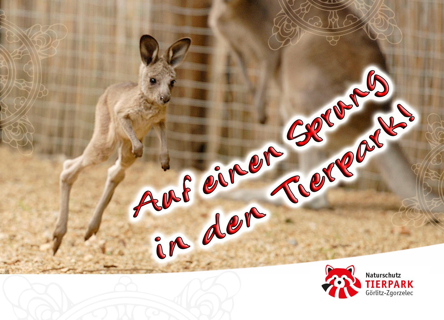 Postkarte Känguru: Auf einen Sprung