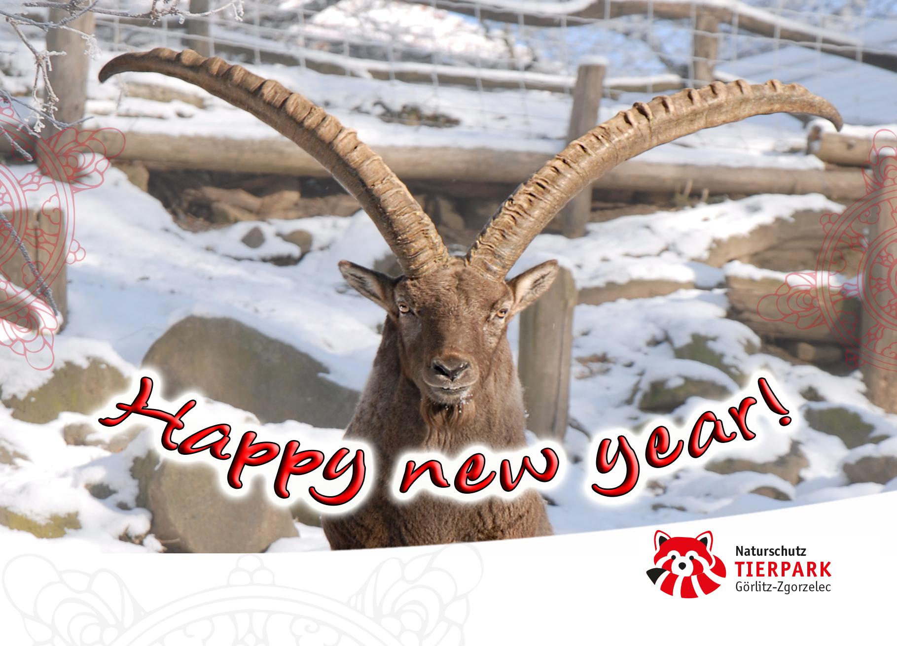 Postkarte Steinbock: Happy New Year!