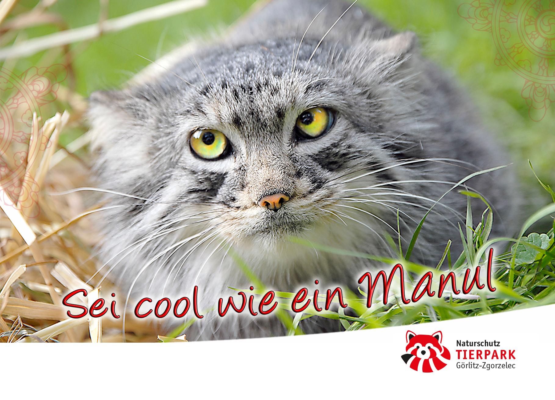 Postkarte Manul: Sei cool wie ein Manul!