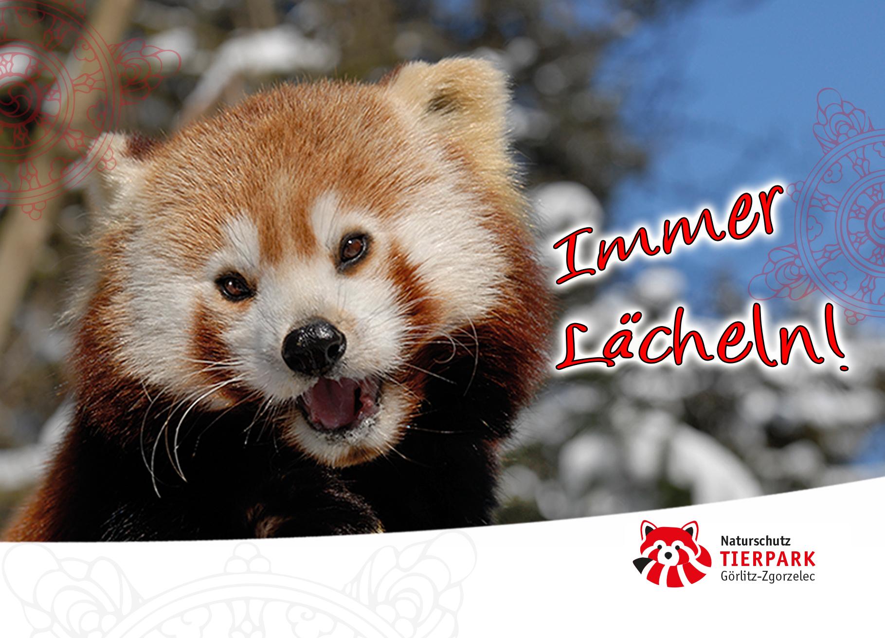 Postkarte Roter Panda: Immer Lächeln!